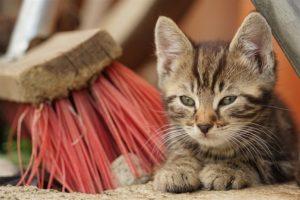 Kitten 2016