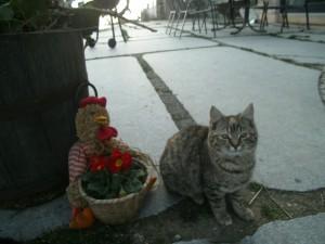Mrs.Cat
