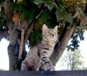 Katze auf Jagd